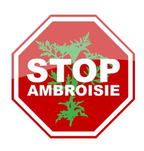L'AMBROISIE : UNE PLANTE DANGEREUSE POUR LA SANTÉ